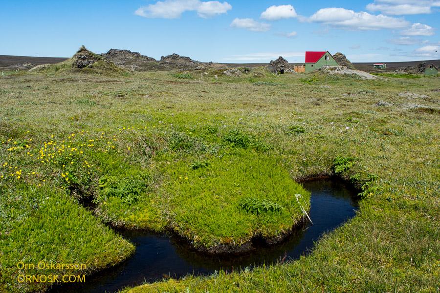 Gróskumykill gróður við Tjaldvatn